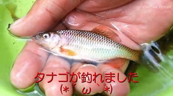 タナゴ 川釣り