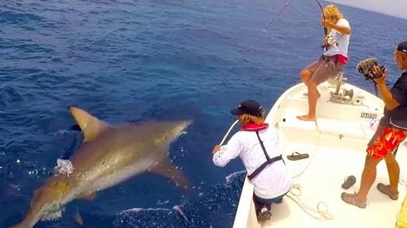 サメ 釣り 捕獲 大物 ハイサイ探偵団