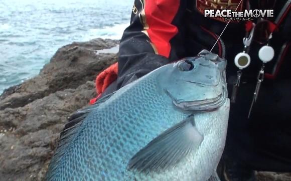 グレ 磯釣り 平和卓也 紀伊半島 和歌山県 串本