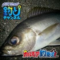 fimo 釣りチャンネル カルモア釣査団 イサキ ウキフカセ