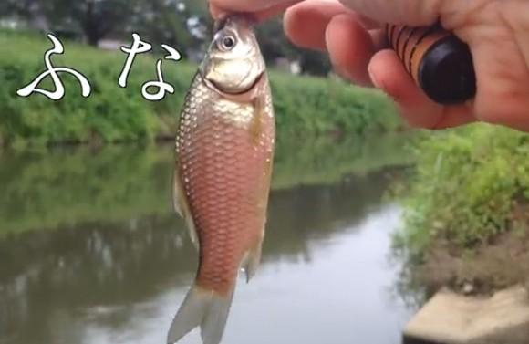 フナ 釣り 埼玉 日本小物釣り初心者代表