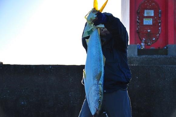 ブリ 青物 釣果 高知 しんすけのブログ しんちゃんの釣り場情報