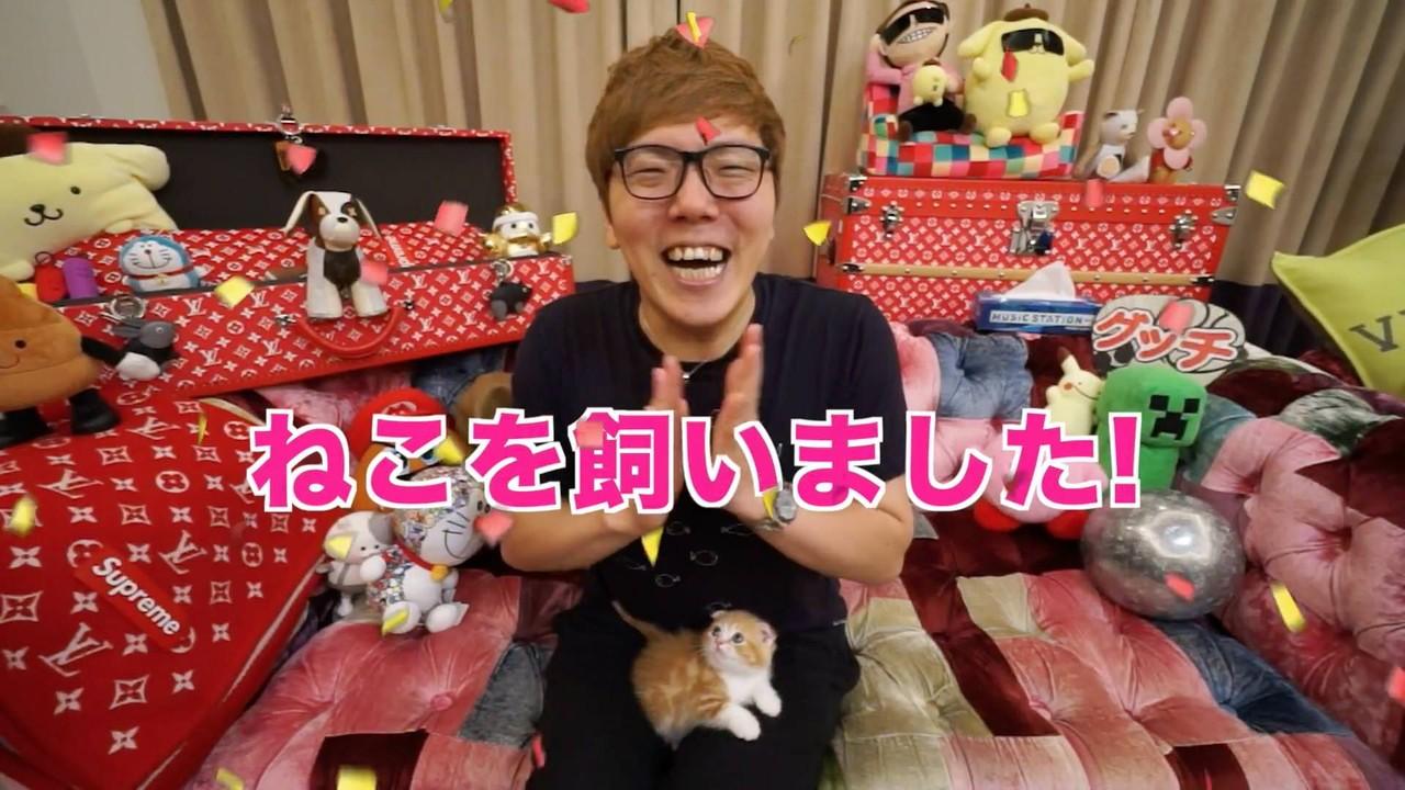 【朗報】ヒカキンさん、子猫を飼い始める