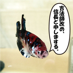 信長_hello