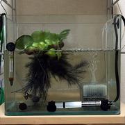 繁殖用水槽