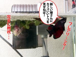 無視する白蝶♀ちゃん