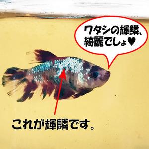 寧々_06.26