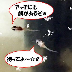 稚魚19日目