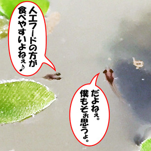 稚魚27日目