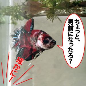 秀吉♂くん_08.01