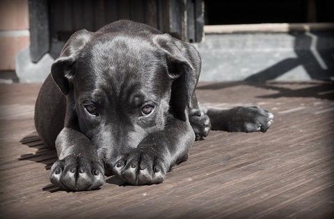 【動画】狂犬病にかかった人の末路がこちら・・・の画像