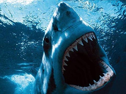 【恐竜】太古の巨大ザメ「メガロドン」怖すぎデカすぎワロタの画像