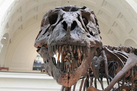 【真実】恐竜に小型と大型しかいない理由が判明wwww中型ってどこにいったの?の画像