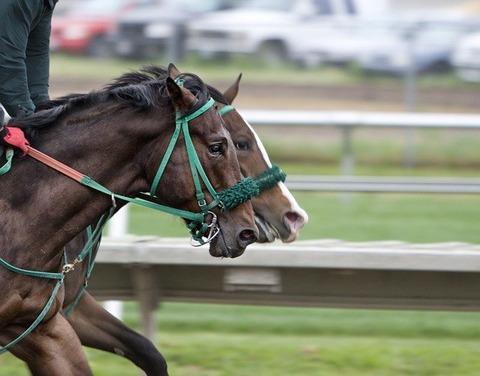【競馬の闇】競走馬「アカン、足折れてもうた……」の画像