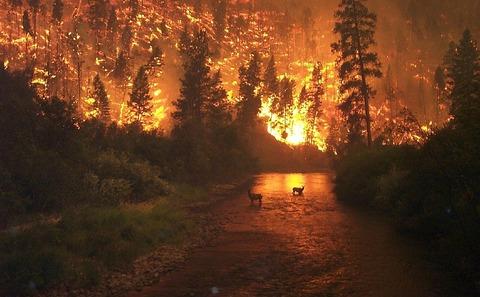 足利の山火事中に地元民が取った行動がwwwwwの画像
