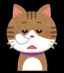 cat3_3_sleep
