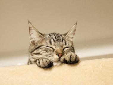 kitten_image_800