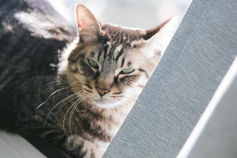 cat126IMGL5532_TP_V