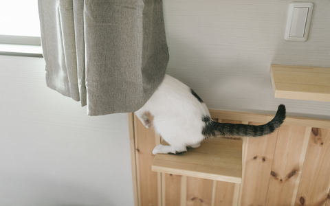 cat126IMGL5554_TP_V