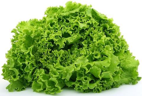 lettuce-1239155_640