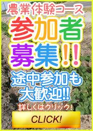 農業体験の募集開始