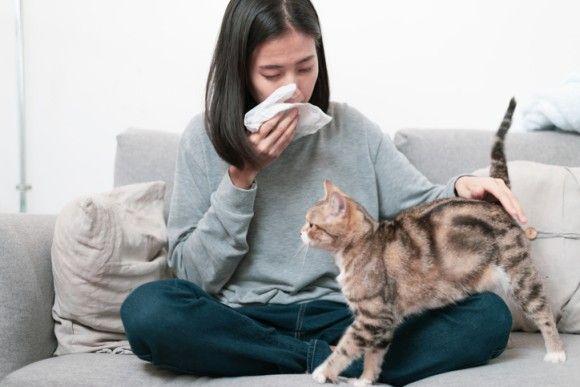 猫好きだけど猫アレルギー、そんな人に朗報かも。アレルギーの症状を緩和してくれる抗体入りのキャットフードの開発
