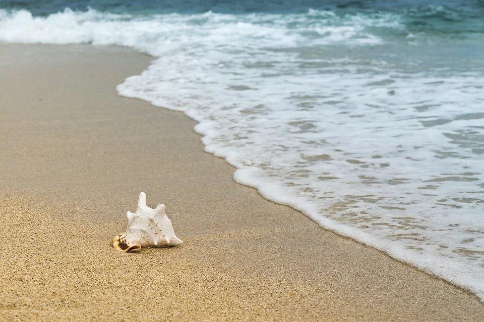 【画像】海岸でヤバい生き物が発見されるwwwww