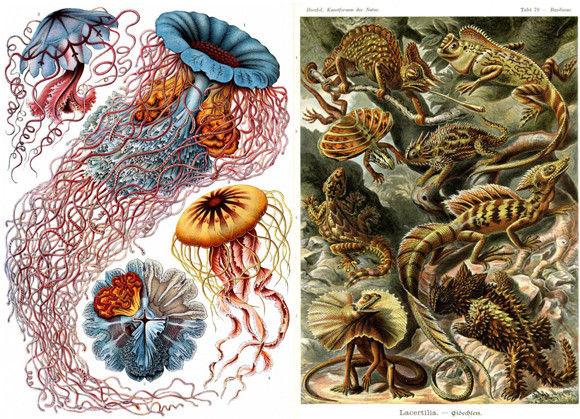 カメラのない時代、精密で詳細な生物画を描きあげたドイツの生物学者「エルンスト・ヘッケル」