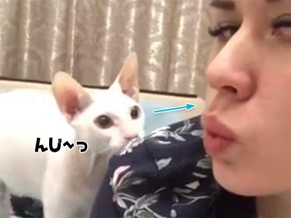 猫とのキッスを自撮りにおさめたかった女性。唇を突き出して猫を待つ。しめしめ近づいてきた...で、こうなった。