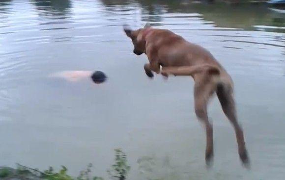 溺れたのか!?池に沈んだ飼い主を救おうと飛び込み、飼い主の手をくわえ引き上げようとする犬(ブラジル)
