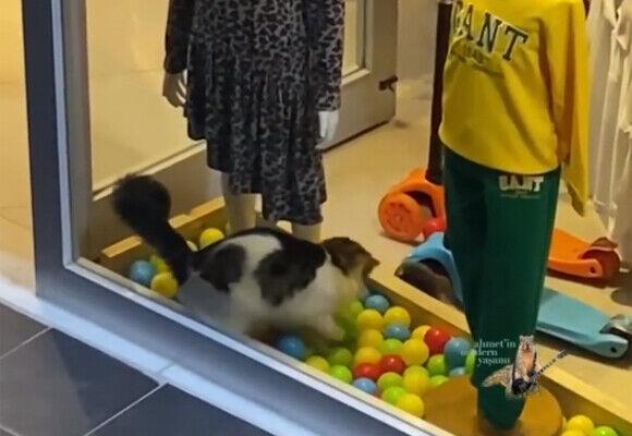 猫の国トルコだから。お店のウインドウディスプレイに入って無邪気に遊ぶ猫