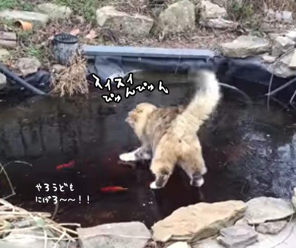 氷一枚隔てた中で。猫と魚の冷ややかな関係