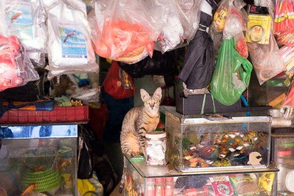 ベトナム、ホーチミン市内のいたるところにいる猫と犬を撮影した映像