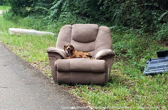 不要な家具と一緒に捨てられた子犬、廃棄されたソファの上で飼い主が戻ってくるのを待ち続ける(アメリカ)
