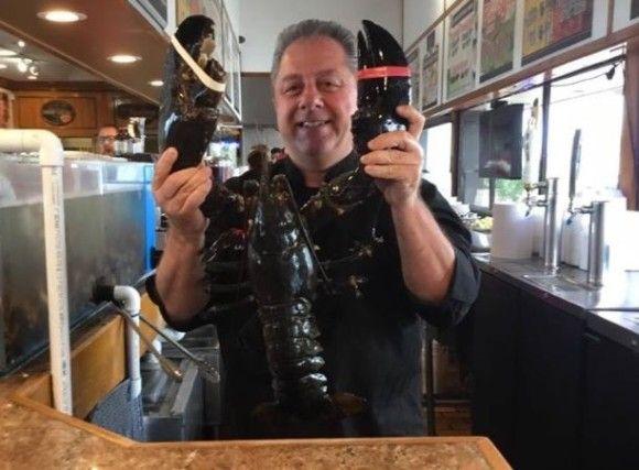 まさかの132歳!シーフードレストランで20年間飼われていた高齢ロブスター、海に帰る