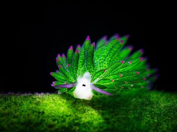 地球内生物筆頭のおしゃかわビューティー。ウミウシの造形美とカラフルさがニクイ!