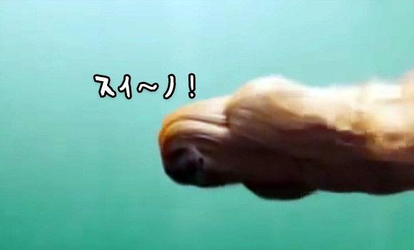 え?新種のUMA?水中を泳ぐこの生物の正体は?