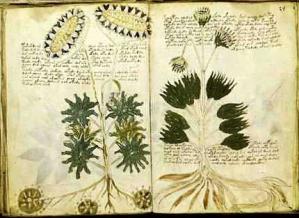 ヴォイニッチ手稿の洞察(1)
