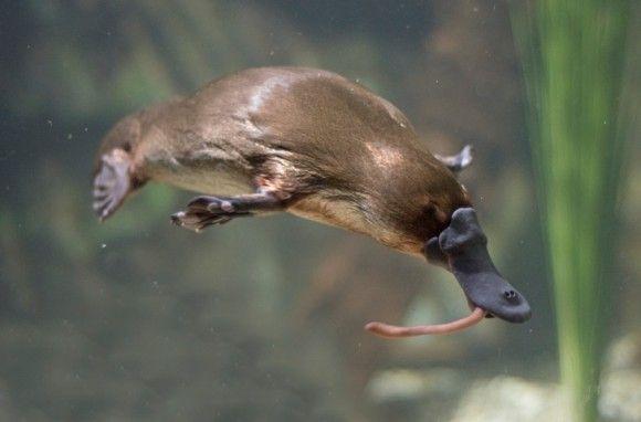 種の垣根を越えて移動する遺伝子があるという説が、進化の常識に一石を投じる(オーストラリア研究)