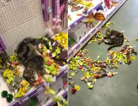 ここは天国かよ!ペットショップに迷い込んだ猫、キャットニップコーナーで人生最高の喜びを知る