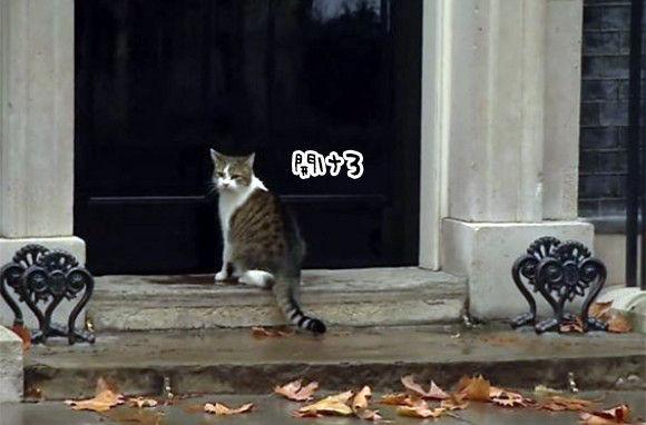 イギリス首相官邸ネズミ捕獲長の猫、雨の日の外出後、警官にドアを開けるよう指示。で、悠々と入っていく。