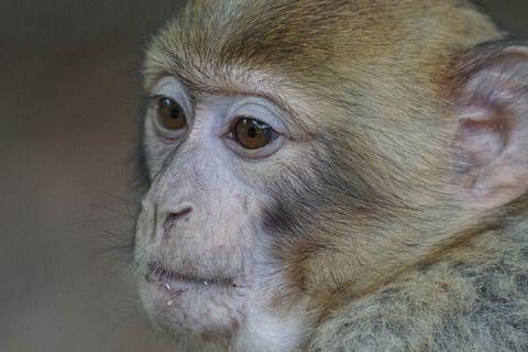 【ミステリー】やまぬしさんの怖い話...猿の妖怪とは?目が合うと襲い掛かってくるものとは...