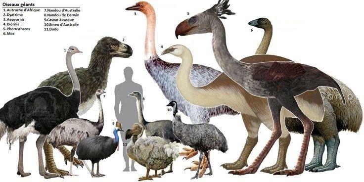 【画像あり】古代の巨大鳥がヤバいくらいデカくて怖過ぎるwwwwwww
