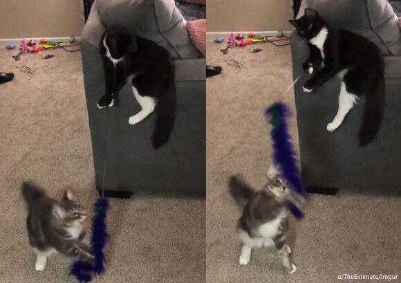 はい釣れた!猫が猫を猫じゃらしでじゃらすという珍百景