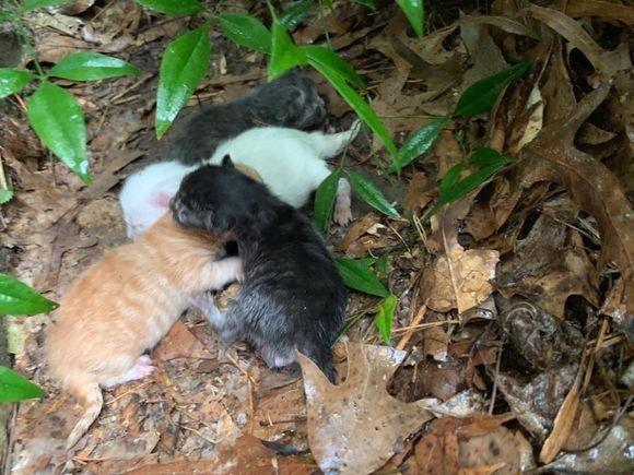 嵐の中で出産し、びしょぬれになりながら子猫たちを大雨から守り抜いた母猫(アメリカ)
