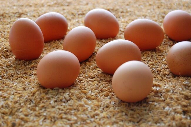 【!?】超有名人、卵を買い占められてしまったのでニワトリを育て始める鉄腕ダッシュ方式を採用wwwww