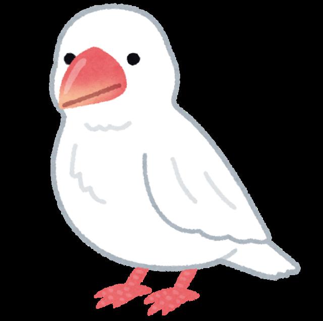【画像】かっこいい鳥見つけたんだが、名前教えてくれ!鳥博士のネット民なら即わかるよな?