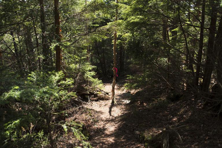 有名心霊スポットめぐりをして帰る途中に  山の中に続く階段が目についたので登ってみた