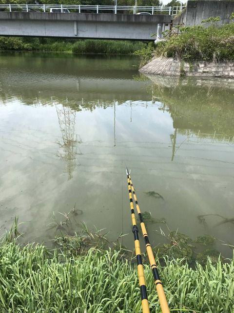 【実況】ワイ、月曜の昼間からヘラブナ釣りをする!