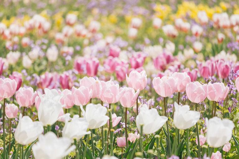 【心霊怖い話】花を愛する優しいおっちゃん